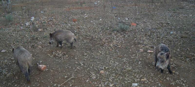 caza mayor en Esparragosa de Lares